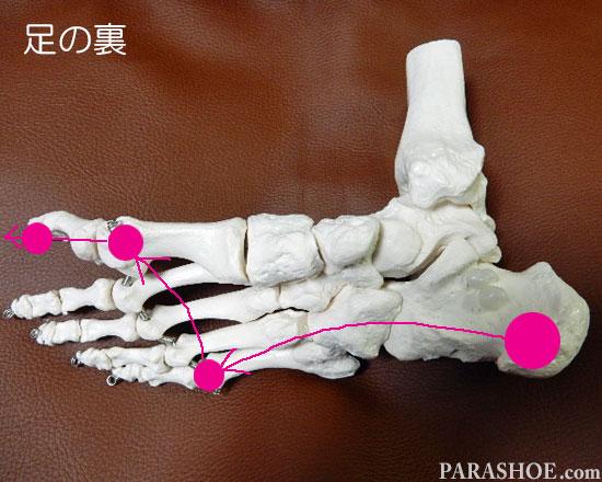 足裏の骨格 歩行時の体重移動