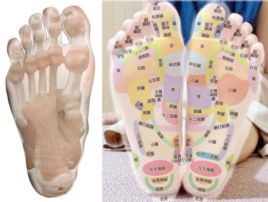 足の骨格、筋肉、足裏のつぼ