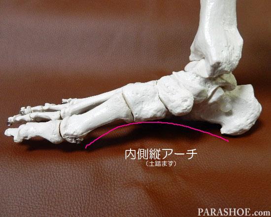 足の骨格の縦アーチ(土踏まず)