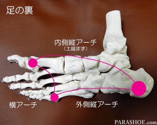 足の骨格のアーチ(縦アーチよ横アーチ)